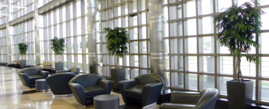 Artificial Office Plant Rental Packages!