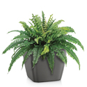 Artificial Tabletop Boston Fern