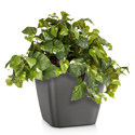 Artificial Tabletop Golden Pothos