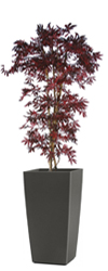 Artificial Red Japanese Maple 6ft