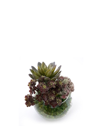 Succulent artificial office plant