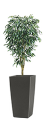 Artificial Weeping Fig Tree 6ft