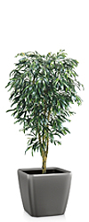 Artificial Weeping Fig Tree Classic