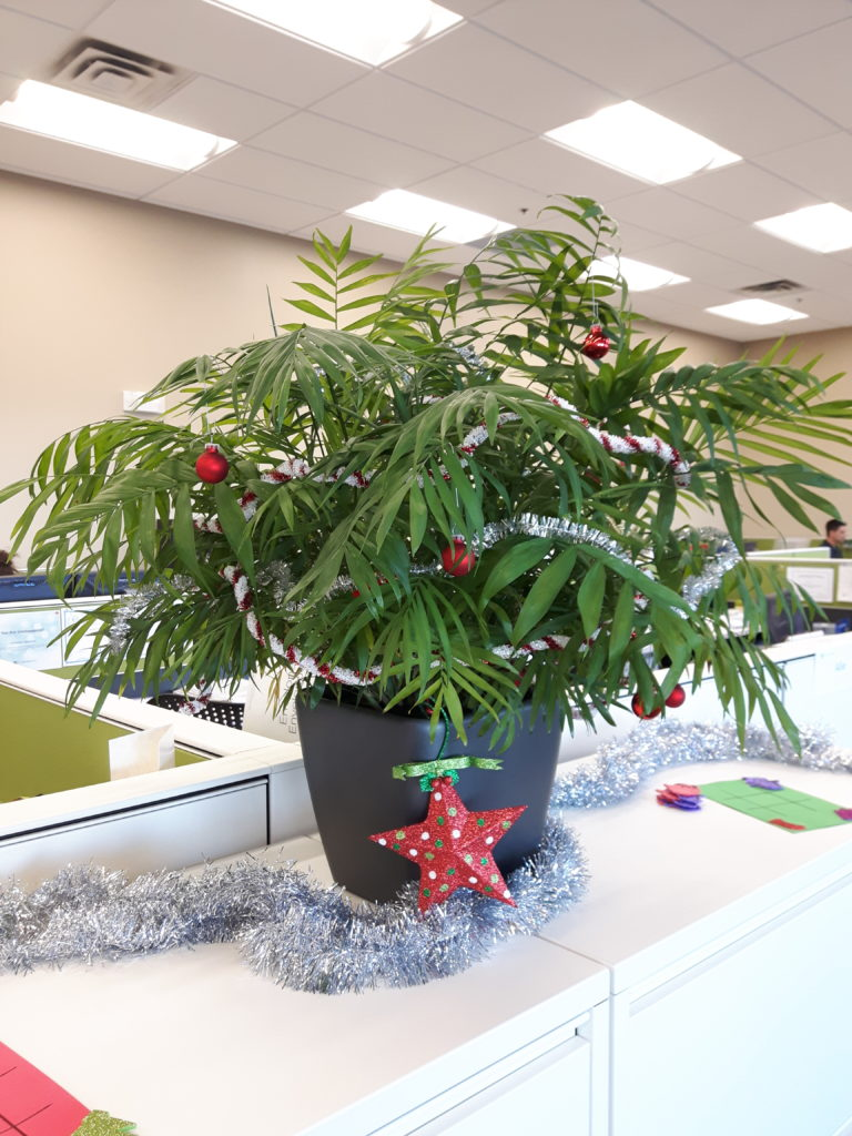Neanthe Bella Palm office plant Toronto Happy Holidays