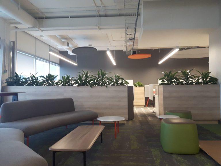 Office plant design Dracaena 'Art'