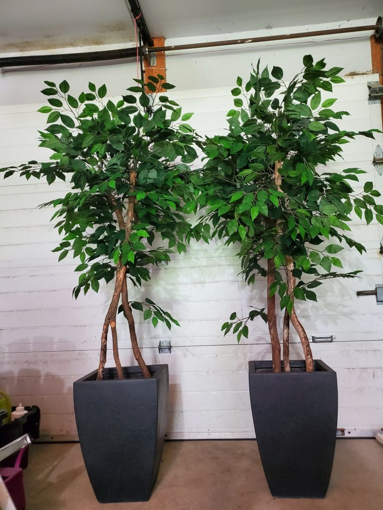 Artificial Ficus Trees Covid 19