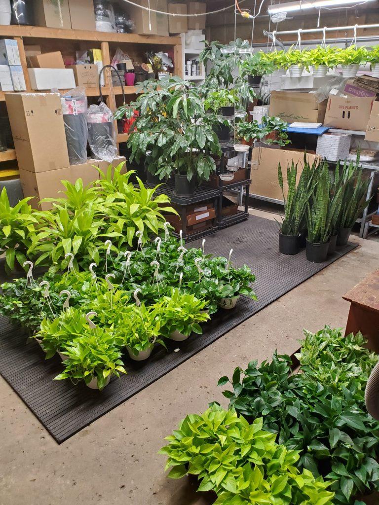 Office plants Mississauga Covid 19
