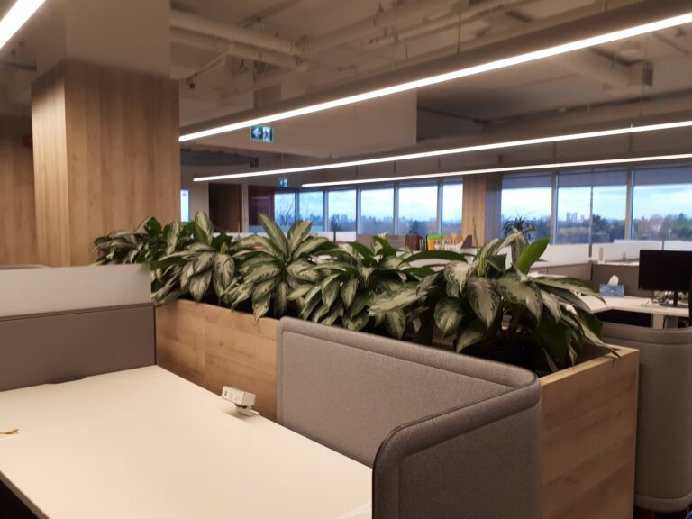 Welcome employees back to the office, Aglaonema, custom planter, barrier of plants