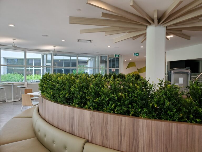 Welcome employees back to the office, artificial boxwood