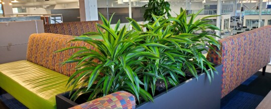 Welcome employees back to the office! with plants!